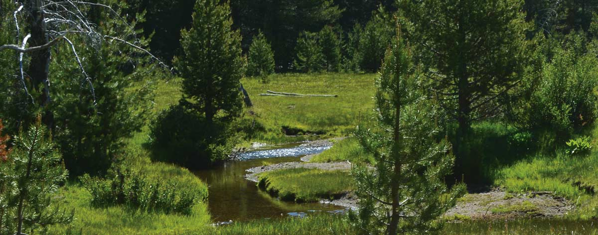 image of stream at PFT easement property